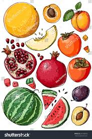 set fruit fresh food watermelon cantaloupe stock vector 567608929