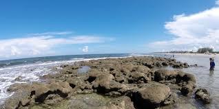 Jensen Beach Florida Map by Treasure Coast U0027s Beaches Marine Life Make It A Top Spot For