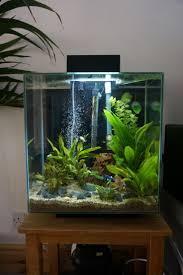 idee deco aquarium best 25 aquarium einrichten ideas on pinterest nano aquarium