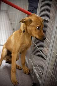 dog euthanasia disturbing photos capture the realities of euthanization at animal