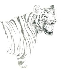 tiger pencil sketch by the twins on deviantart