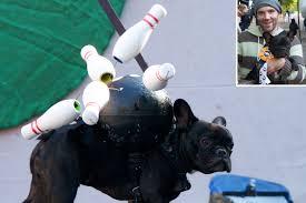 Bowling Halloween Costumes Dog Husband Quitting Halloween Pooch