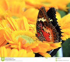colorful butterfly on flower stock images image 9588704