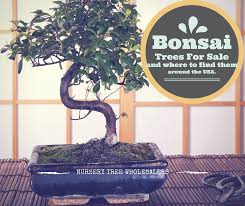 nursery tree wholesalers world s best bonsai trees home