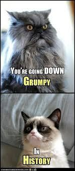 Colonel Meow Memes - those eyes colonel meow colonel meow pinterest cat