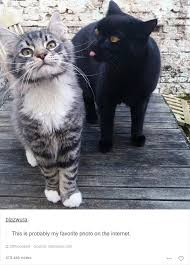 Cats Memes - 52 funny cat memes that prove cats still rule the internet