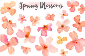 watercolor clipart u2013 spring flower blossoms flower blossom clip