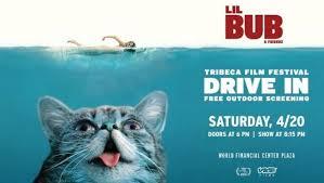 Lil Bub Meme - tribeca review lil bub friendz
