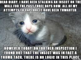 Sad Cat Memes - sad cat diaries are officially the funniest thing ever