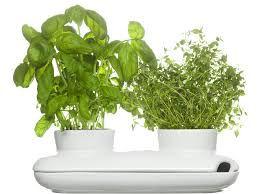 wall plants indoor modern indoor pots and planters to clearly