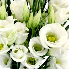 single delivery single lisianthus flower for october to may delivery