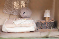 Hamster Bed Hamster In A Trailer Toy Stock Photo Image 66322922