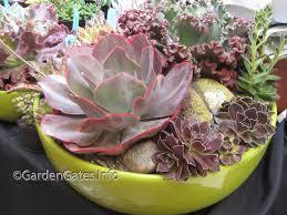 Dish Garden Ideas Use Succulents As A Garden Building Material Gardengates