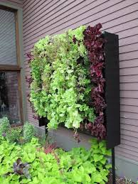 62 best indoor herb garden nano garden images on pinterest herbs