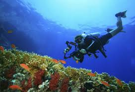 North Dakota snorkeling images Scuba and snorkelling safety in egypt read this jpg
