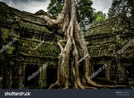 trees growing out ruin ta prohm stock photo 112414991
