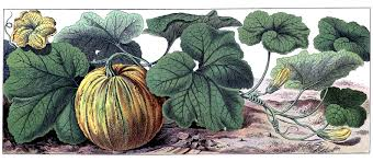 vintage halloween graphic botanical pumpkin the graphics fairy