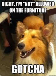 Dog Funny Meme - 28 hilarious dog memes for 2018 quoteshumor com quoteshumor com