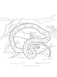 coral snake coloring page free printable coloring pages
