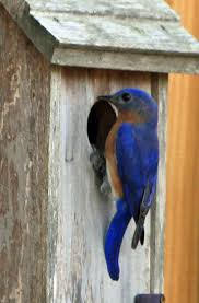 315 best birdhouses images on pinterest bird feeders bird