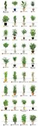 34 best house plants images on pinterest gardening plants and