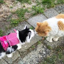 Cat Instagram Instagram Cat Sophie Has A Kitty Boyfriend Who Loves Her