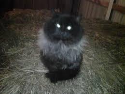 Barn Cat Names Pennsylvania Equestrian Readers Share Their Favorite Barn Cat Stories