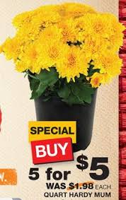 home depot black friday plant sale 1 00 mums at home depot and lowe u0027s how to shop for free with