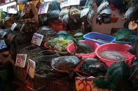 qu est ce qu un chinois en cuisine cuisine et nourriture chinoise une diversité incroyable et