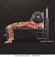 Wide Grip Bench Press For Chest Barbell Bench Press Stock Images Royalty Free Images U0026 Vectors