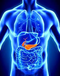 bauchspeicheldrüsenschwäche symptome bauchspeicheldrüsenkrebs symptome 24 anzeichen