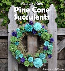 make your own pine cone succulents pine cone pine and couples