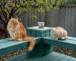 wendy u0027s 3 d cats october 2011