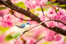 blooms flowers free photo blooms flowers plants bird wildlife blossoms max pixel