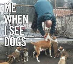Dog Lover Meme - dog lover i can has cheezburger