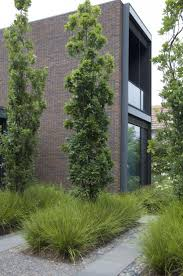 821 best contemporary images on pinterest landscaping gardens