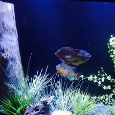 aquarium installation and aquarium services neas