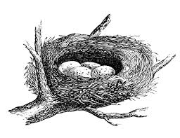 bird u0027s nest clipart outline pencil and in color bird u0027s nest