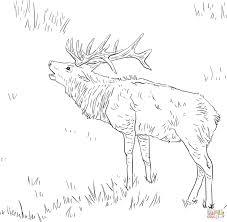 german shepherd coloring pages free tule elk deer coloring page free printable coloring pages 22463