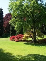 albero giardino alberi da giardino piante da giardino alberi per il giardino