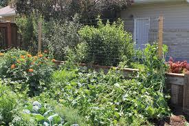 trellis farming in the suburbs
