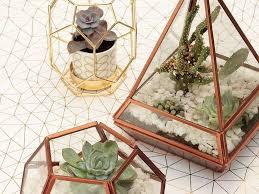 create an indoor garden with a terrarium succulents and cacti