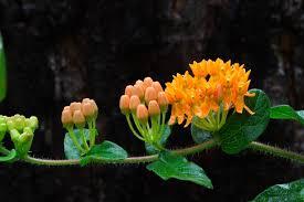 virginia native plant society blogs plant more plants