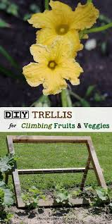 a sy wire mesh trellis provides a vertical growing area for climbing fruits and veggies including zucchini cuber squash and melons