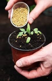 fertiliser for native plants 16 best fertilizers images on pinterest organic fertilizer
