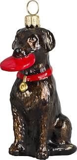 127 best disc dogs wow images on whippets a and