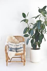 18 indoor plants for the small space gardener rubber plant