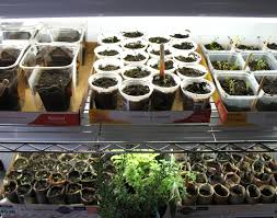 grow your own indoor gardening with wire shelving the shelving