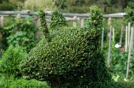 how to trim hedges evenly with shears set up guides