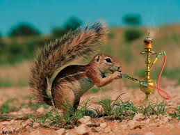 the real way to get rid of squirrel adhd